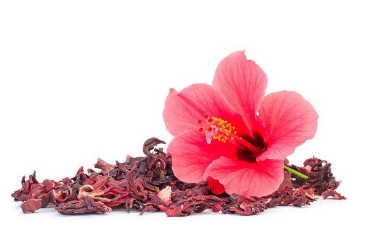 Бугенвиллия - уход в домашних условиях, размножение, цветение, пересадка, болезни, фото и видео